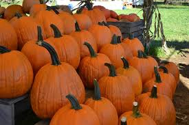 Frederick Maryland Pumpkin Patch by Rodgers U0027 Farm Corn Maze And Pumpkin Patch Maryland Haunted Houses