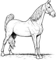 Click To See Printable Version Of American Saddlebred Mare Horse Coloring Page