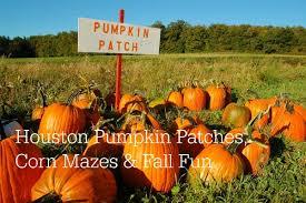 Pumpkin Picking Richmond by Houston Pumpkin Patch