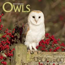 Owl Calendar - Cute Animal Calendar - Calendars 2016 - 2017 Wall ... Barn Owl New Zealand Birds Online Audubon California Starr Ranch Live Webcams Barn Red My Pet Pupo The Barn Owl Mouse Youtube Babyowl Explore On Deviantart Adopt An The Wildlife Trusts Wikipedia Owlrodent Research Project Vineyard Owl Lookie My Pet Growing Up Growing Up Album Imgur Made Out Of Wood And Plant Materials I Found At Parents
