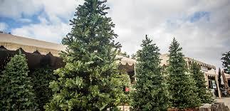 Barcana Christmas Tree For Sale by Pre Lit Permanent Christmas Trees Roger U0027s Gardens