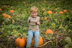 Pumpkin Patch Rides by Sep 22 2016 Oct 31 2016 11th Annual Peebles Farm Pumpkin