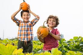 Snohomish County Pumpkin Patches Corn Mazes by 100 Swan Pumpkin Patch Snohomish Best Apple Picking