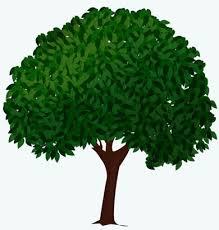 Drawn tree basic 12