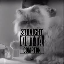 thug cat outta compton gato malo thug cat cats