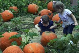 Sacramento Pumpkin Patch With Petting Zoo by Mountain Workshops 2016 Planting Seeds By Joan Lederer