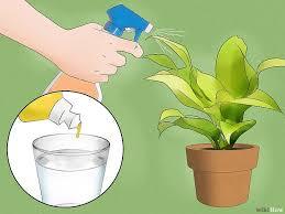 comment faire partir des moucherons dans une cuisine 5 ères de se débarrasser des moucherons wikihow