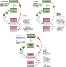 Shedding Of Uterine Lining Before Period by Menstruation Fertilitypedia