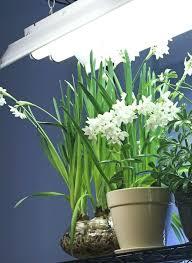 Marvelous Fluorescent Grow Lights 4 Fluorescent Grow Light Grow