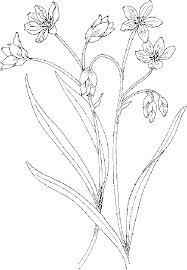 Flower Coloring Pages Two Flowers