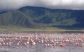 100 Crater Lodge AndBeyond Ngorongoro Tanzania East Africa