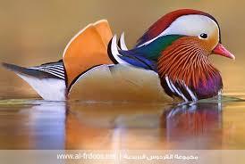 حيوانات روعة images?q=tbn:ANd9GcQ