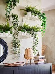 blumen pflanzen für deine grünoase ikea deutschland