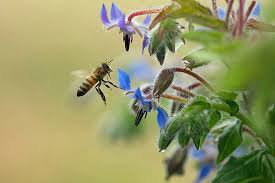 plant a bee garden county beekeepers association