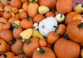 Pumpkin Patch Issaquah by The 10 Best Pumpkin Patches To Explore This Fall Seattle Refined
