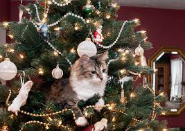 Griswold Christmas Tree Ornament by My Mom Sent Me Photos Of Her New Christmas Tree That Cat Seems To
