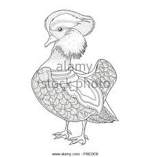 Lovely Mandarin Duck Coloring Page In Exquisite Style