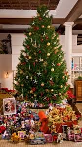 Types Of Christmas Trees To Plant by Arizona Cypress Christmas Tree Christmas Time Pinterest