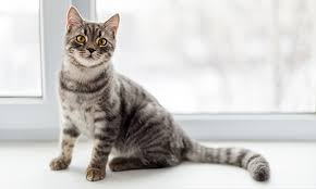 cat cat information articles cat education bayer petbasics