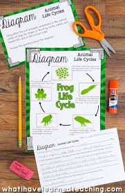 Life Cycle Of A Pumpkin Seed Worksheet by Life Cycles Of Plants And Animals Science Stations For Third Grade