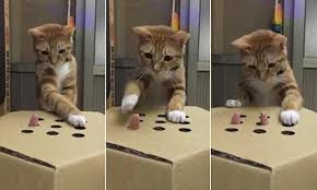 Cat Plays Whac A Mole Game With Owner Using Cardboard Box