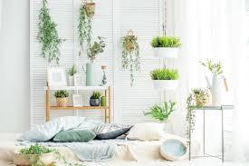 luftreinigende zimmerpflanzen pflanzen zum raumklima verbessern