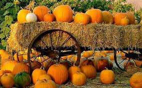 Pumpkin Patch In Homer Glen Illinois by You Can U0027t Have Delicious Pumpkin Seeds Without A Great Pumpkin We