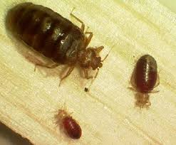 Do I have bed bugs Video tutorial and best practices