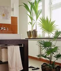 kokos und schirmpalme bild 6 living at home