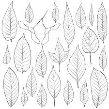 Download Leaves Outline Set Vector Coloring Book Page For Adult Stock