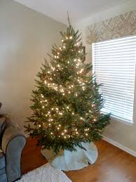 Live Xmas Tree With Lights And Red Bead Garland