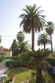 hyeres chambre d hote chambre d hote hyères avec jardin et piscine