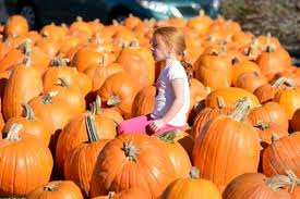 Denver Area Pumpkin Patches by Low Prices On Pumpkins Halloween Parties And Other Free And Cheap