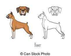 Set Of Colorful And Monochrome Outline Drawings Full Body Head Boxer Dog