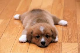 the best flooring for pets the forzese group the forzese group