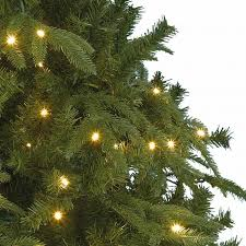 6ft Pre Lit Christmas Trees Black by Kaemingk Everlands Victoria Pine Pre Lit Christmas Tree 6ft