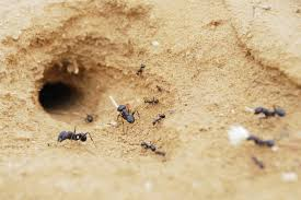 mon Locations for Ant Nests