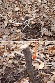 Deer Antler Shed Trap by 101 Best Traps Images On Pinterest Camping Survival Survival