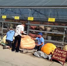 Largest Pumpkin Ever Weight by Roaming Rita Giant Pumpkins
