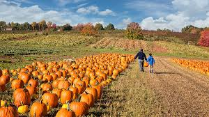 Best Pumpkin Farms In Maryland by 6 D C Area Pumpkin Patches You Won U0027t Want To Miss Nbc4 Washington