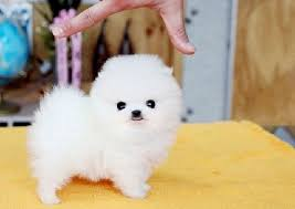 Cute Low Shedding Dogs by Best 25 Small Family Dogs Ideas On Pinterest Cute Dogs Cute