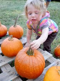 Pumpkin Patches In Okc by Five Tips For Visiting The Pumpkin Patch News Edmondsun Com