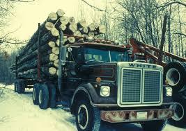 100 Aspen Truck FileA Truck Carries Many Aspen Cut Treesjpg Wikimedia Commons