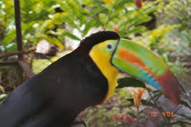 Villas Sol Hotel Beach Resort Fruit Loops Bird