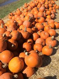 Rombachs Pumpkin Patch by Fall In Love With Fall 2 Sisters Two Cities