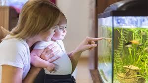 aquarien unterwasserwelt fürs wohnzimmer mdr jump
