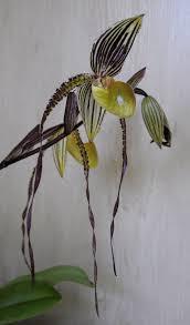 100 Edward Szewczyk OrchidRoots