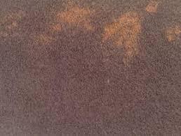Dog Urine Wood Floors Vinegar by How To Get Rid Of Dog Urine Odor Carpet Free Natural Recipe