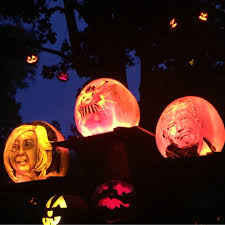 Roger Williams Pumpkin by Pumpkins Make Comeback After Bad Crop Last Year In Illinois Here