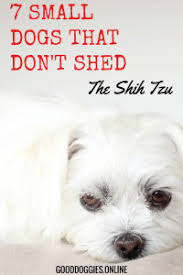 Small Dogs That Dont Shed by 7 Adorable Small Dogs That Don U0027t Shed Good Doggies Online